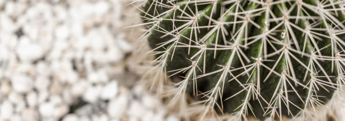 Cactus on white background.