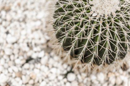 Cactus on white background.
