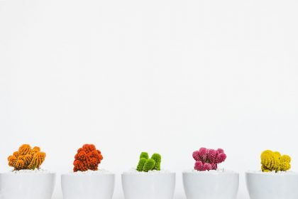 a row of brightly coloured cacti