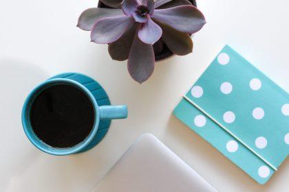 notebook, tea, and a succulent